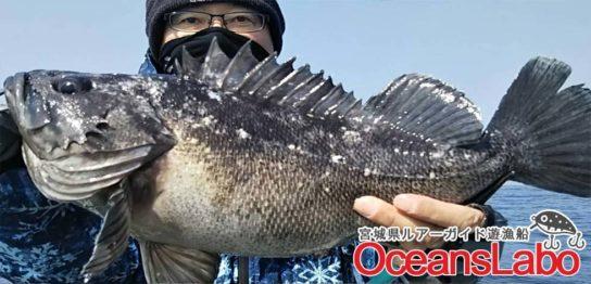 釣り船オーシャンズラボで行く!宮城県石巻湾の根魚ライトジギング!好調続き