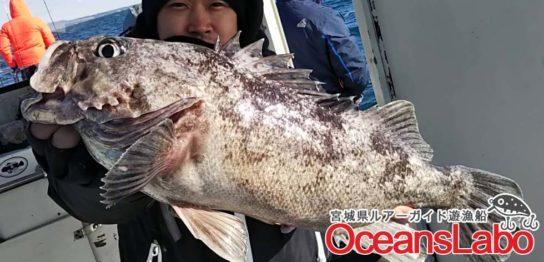 宮城の釣り船オーシャンズラボで行く根魚スーパーライトジギング