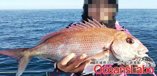 仙台湾の宮城県真鯛まだまだ釣れます!本日真鯛1枚、虎河豚2匹、ワラサなど総勢73匹