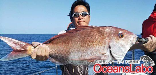 しゃくって!しゃくって!真鯛4枚!巨大サメ4匹に太刀魚でけーーー( ゚Д゚)