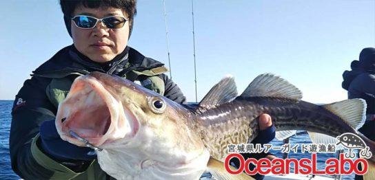 宮城県石巻湾の真鱈ジギングとスーパーライトジギング!好調パート2