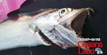 真鯛におすすめなリール買取15